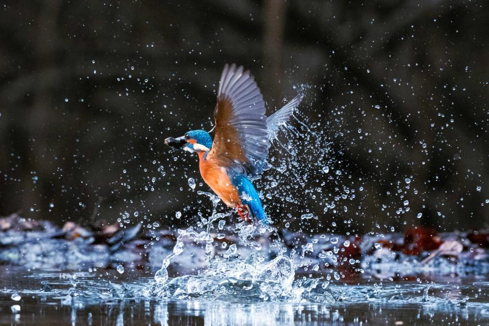 Chi conosce l'importanza dell'acqua meglio di un pescatore?